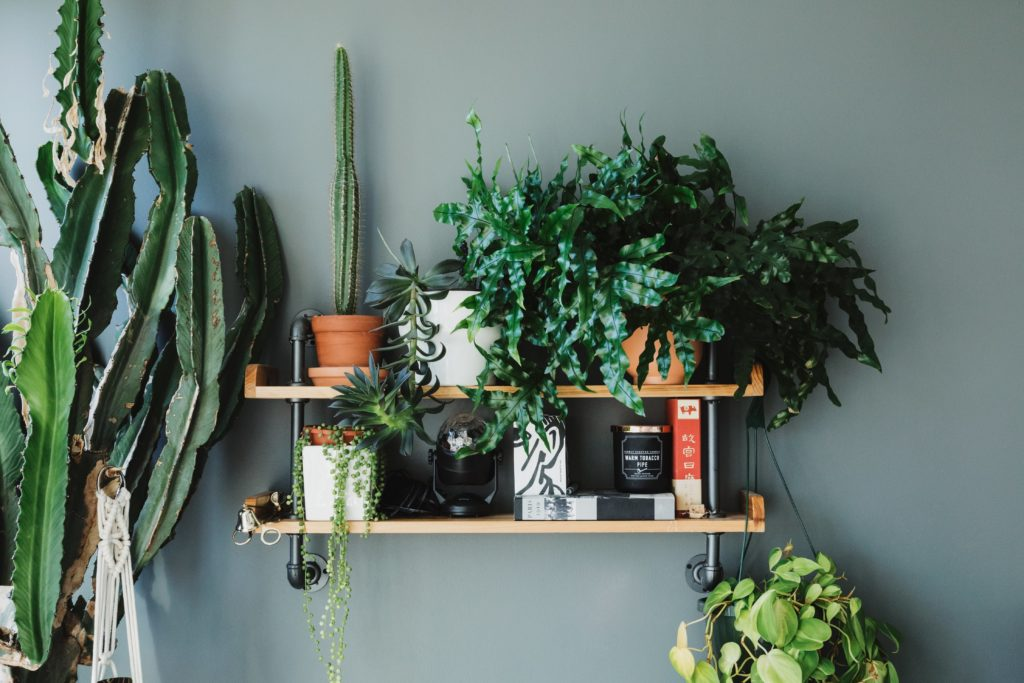 How to pick the right plant for you